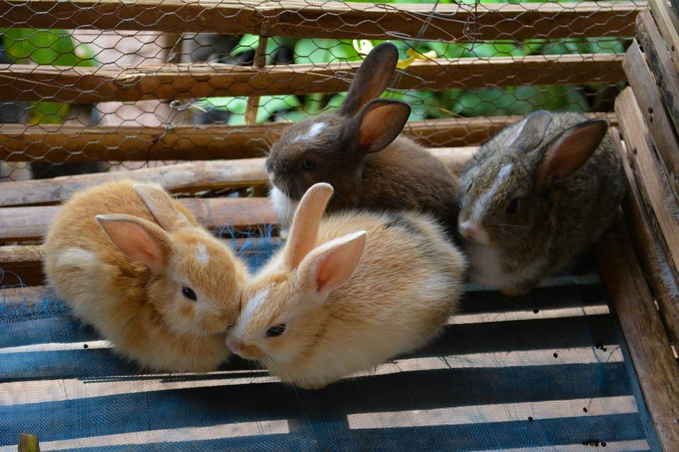 Garde d'animaux et embarquement de lapins. Les soins optimaux en vacances
