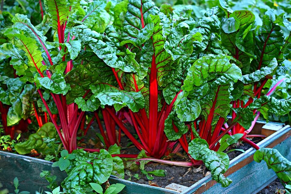 Créer un jardin : Tout est question de sol